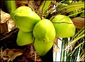 Coconut Water for Health and Glow