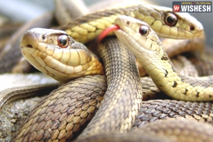 CRPF Personnel Rescue Snakes from Flood Water