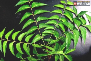 The Five Best Ways To Use Neem For Dandruff-Free Hair