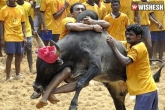 Protesters Demand Promulgation of Jallikattu Ordinance, Panneerselvam Meets PM Modi