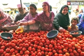 cities, august, tomato price to be high till august end, Fresh