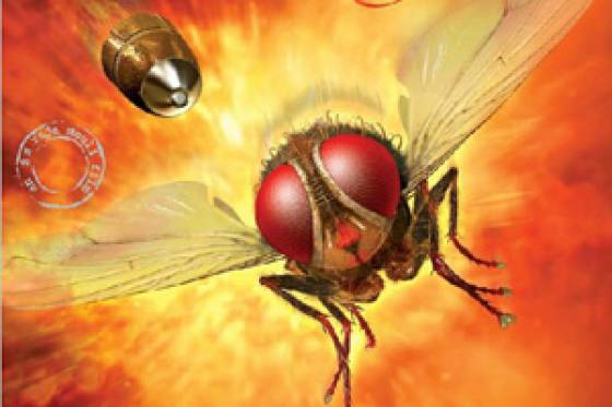Eega off  to Bollywood as Makkhi
