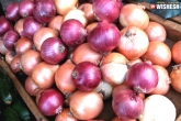 health tips, Onions, 5 benefits onions can really give, Health tips