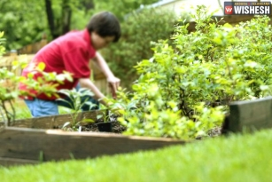 Some Tips For Your Plants During The Monsoon Months
