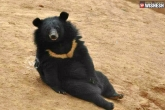 not bears, bears treated as puppies, adopted bears mistaking them to be puppies, Bear