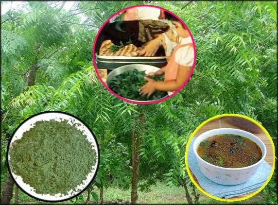 Importance of neem in our tradition!